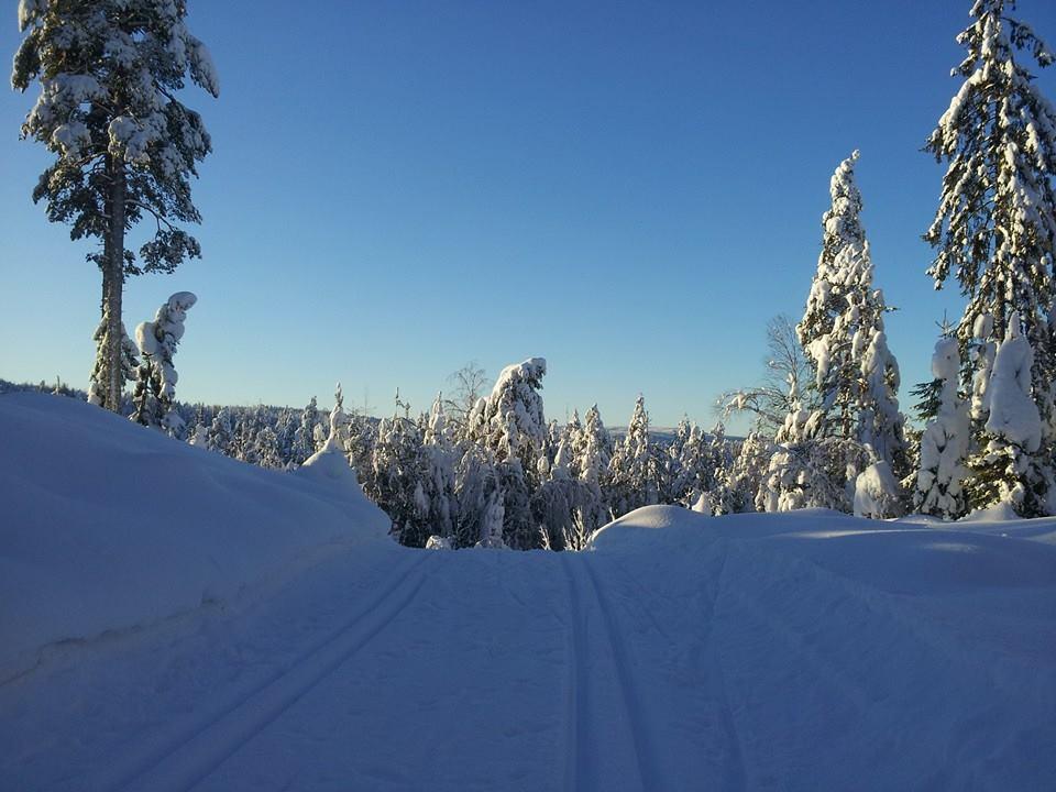 SvelvikIF skispor 1
